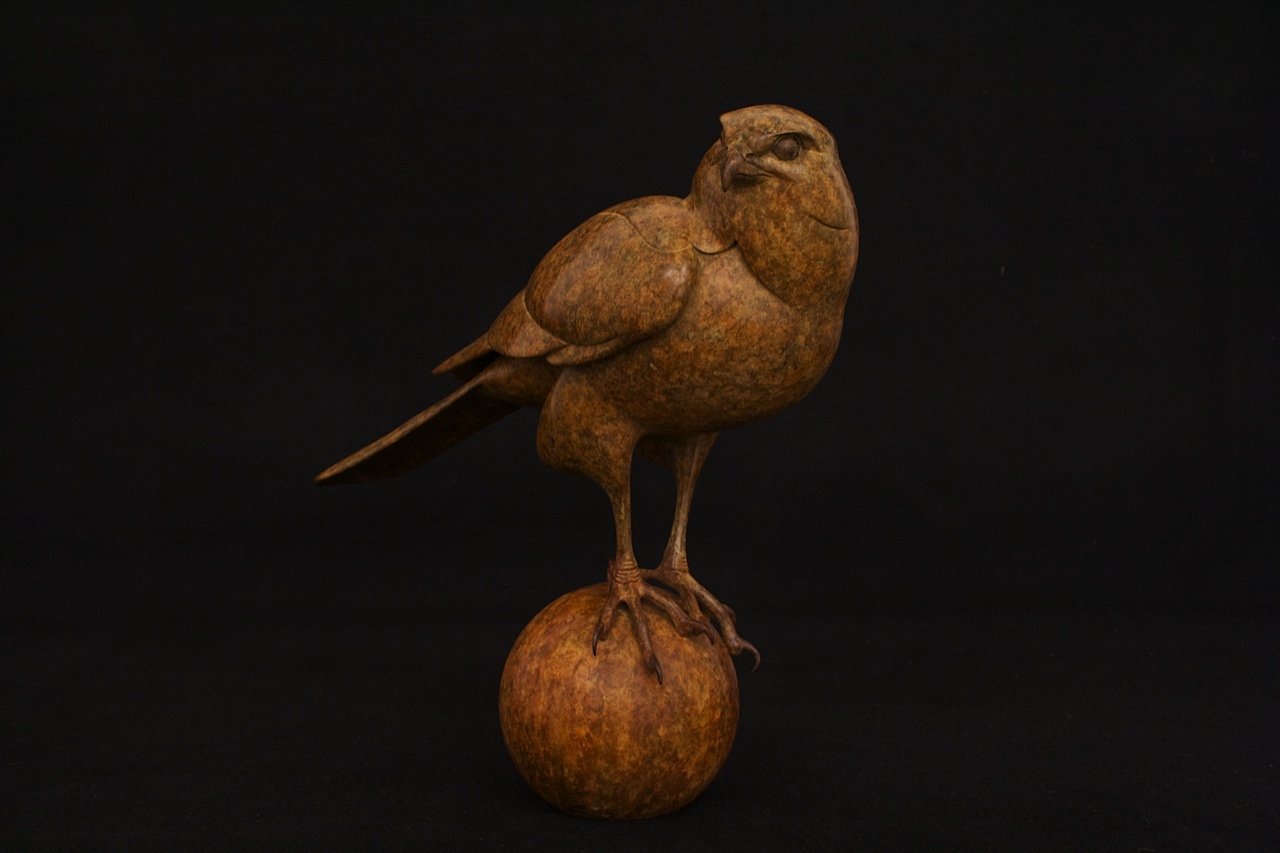 Bronze Sparrow Hawk