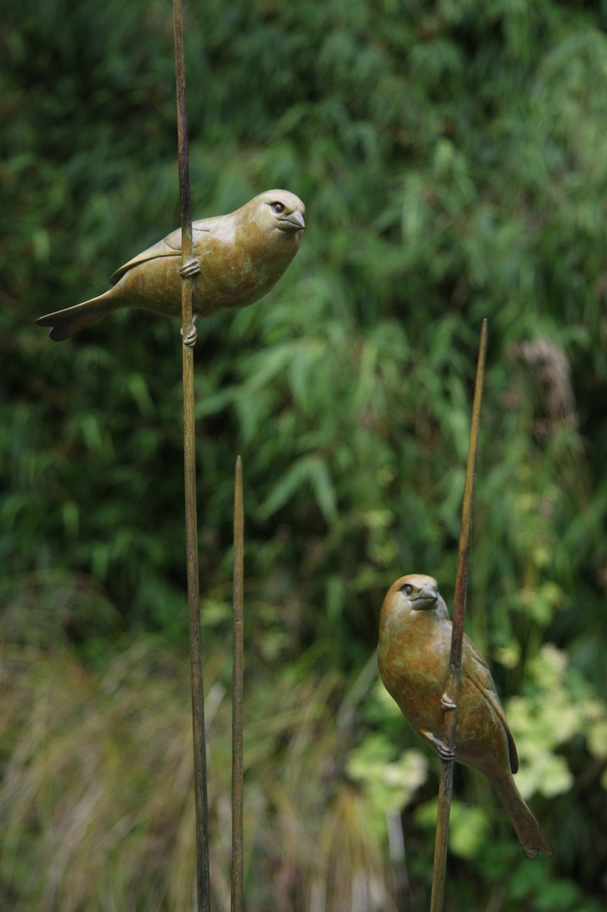 Bronze Greenfinches