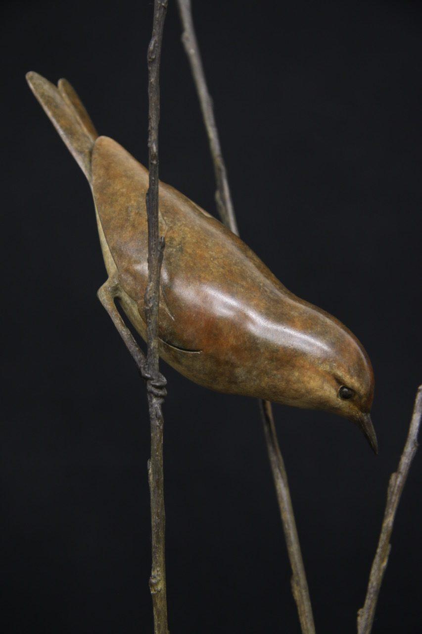 Bronze Willow Warbler