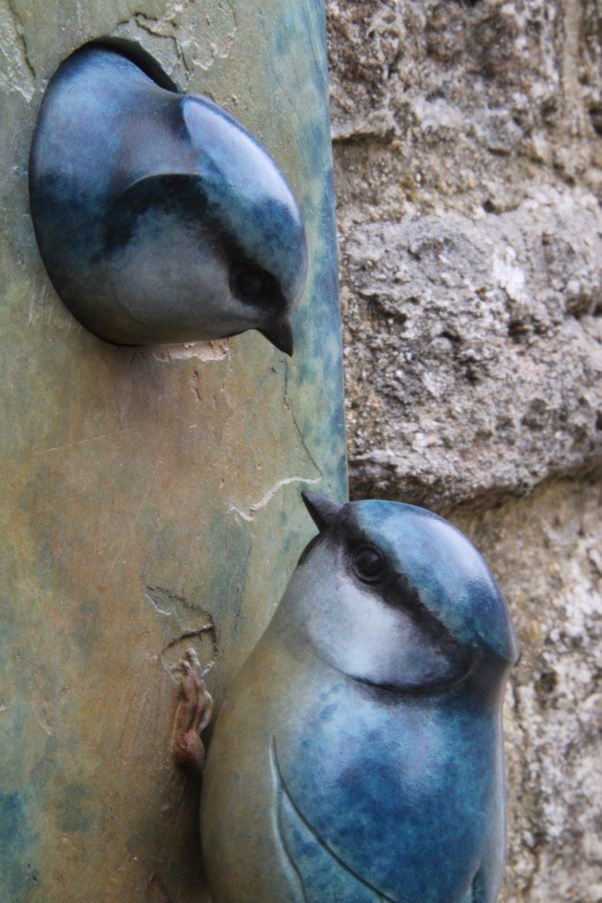 Bronze Blue Tit