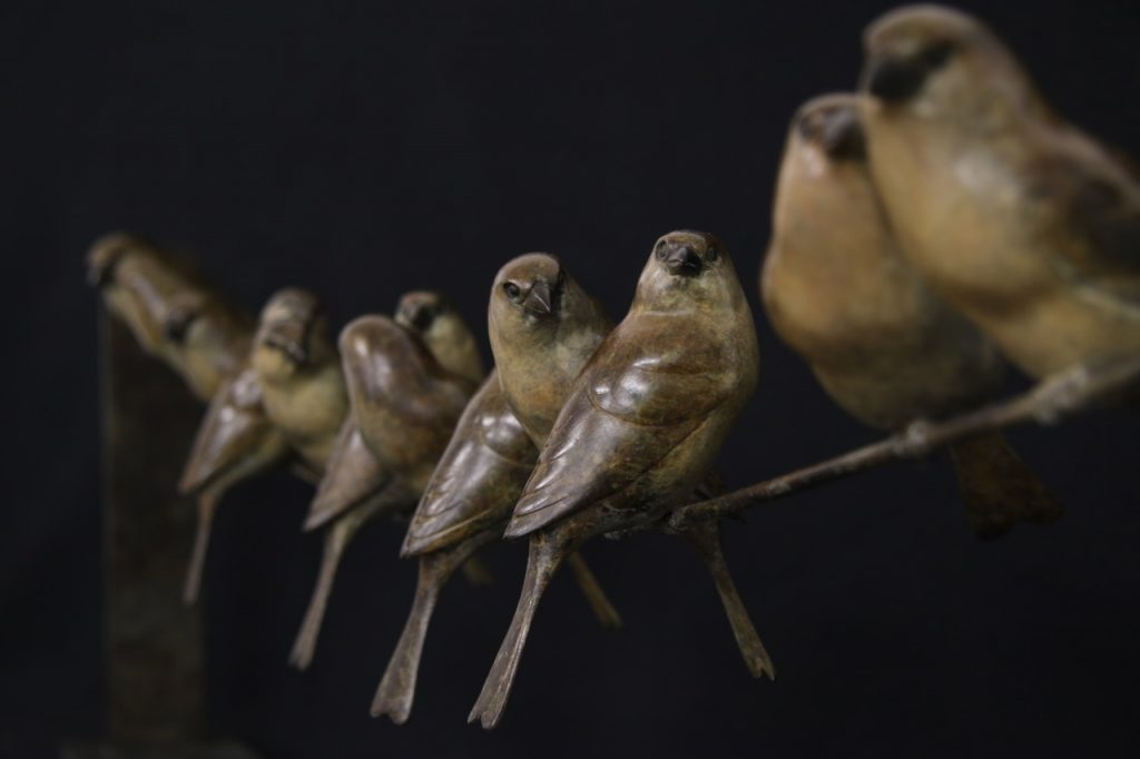 Bronze Sparrows