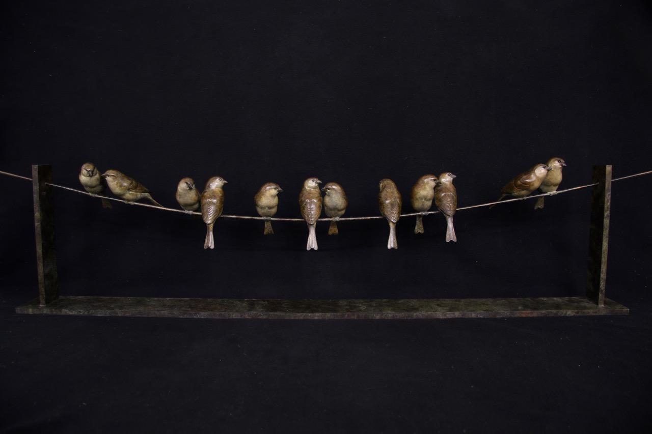 Bronze Sparrows