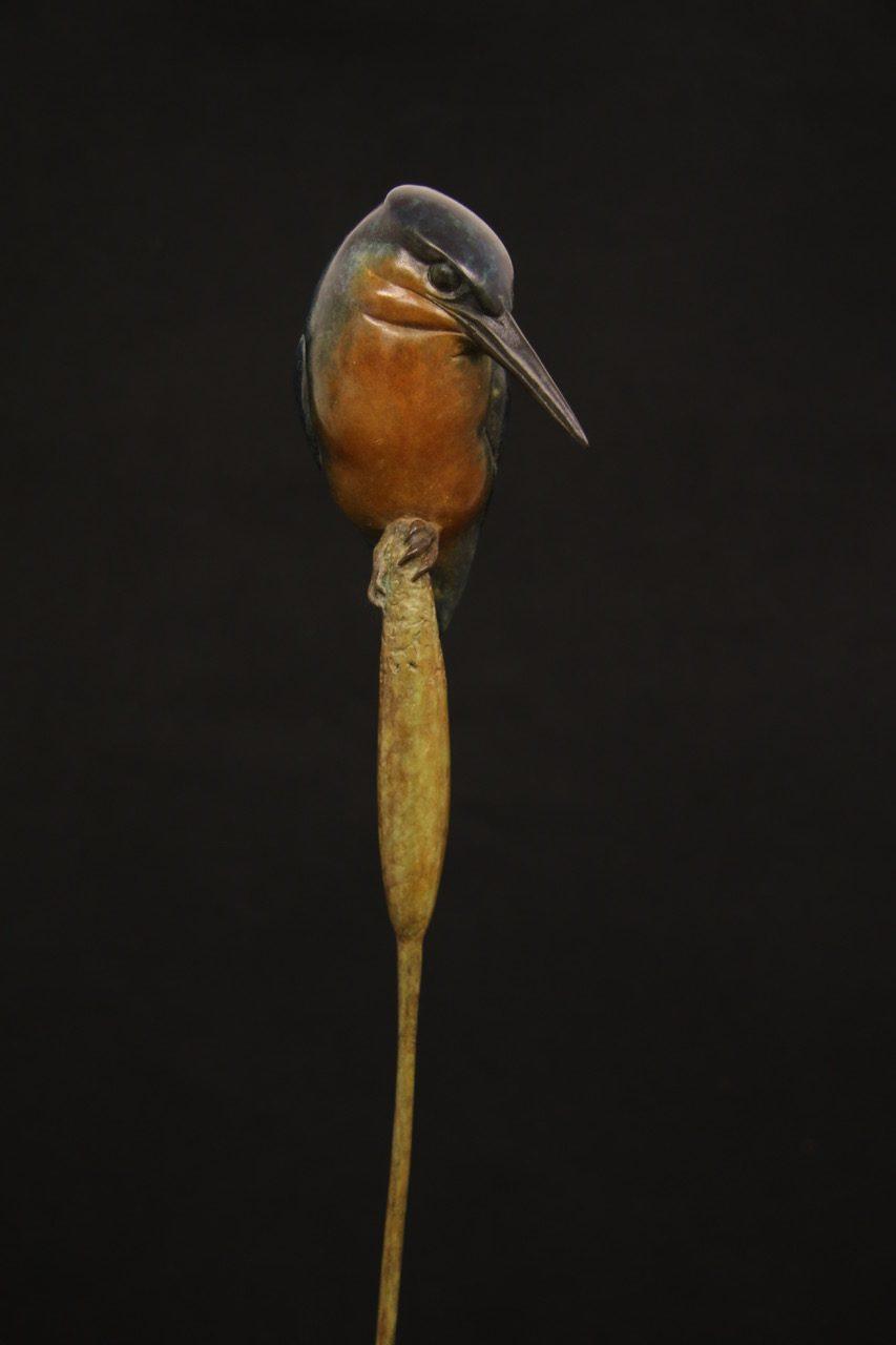 Bronze Kingfisher