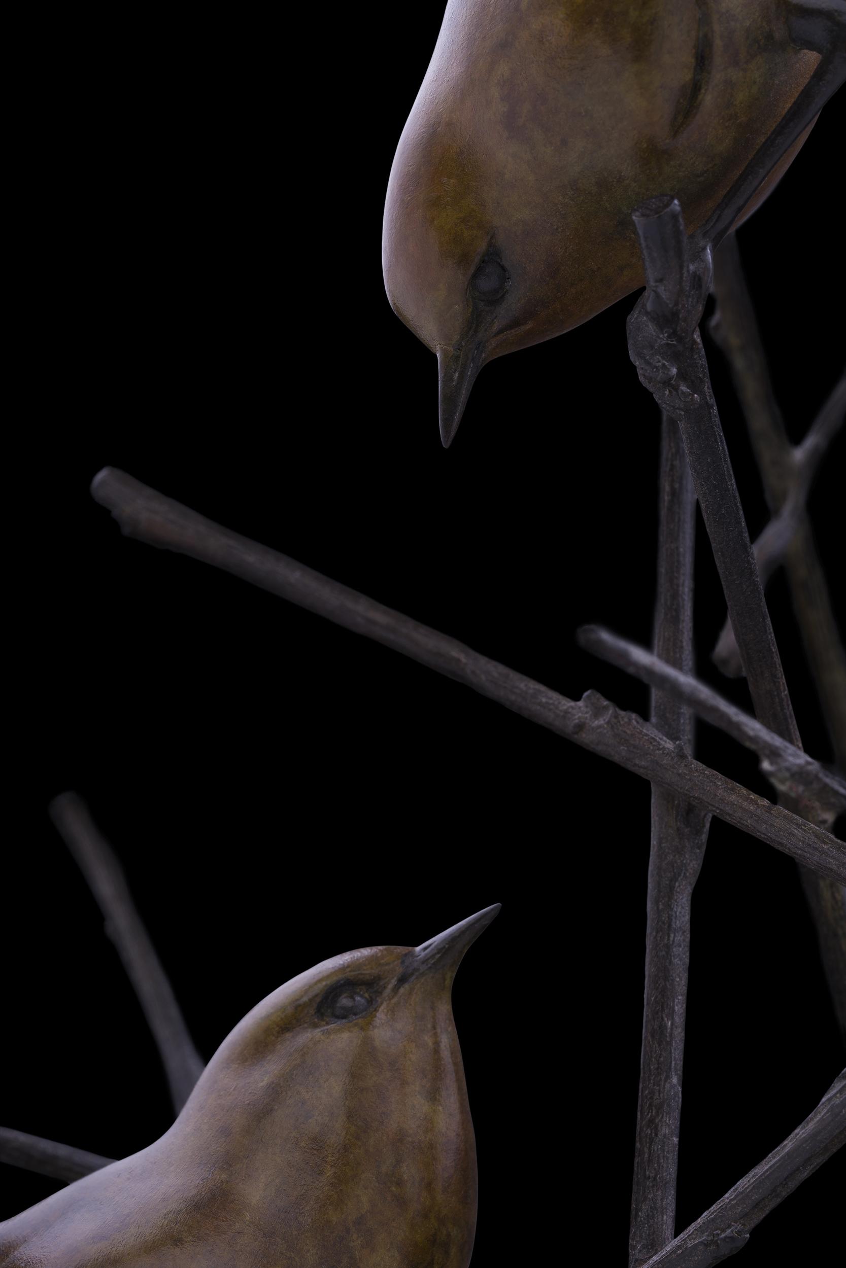 Bronze Wrens