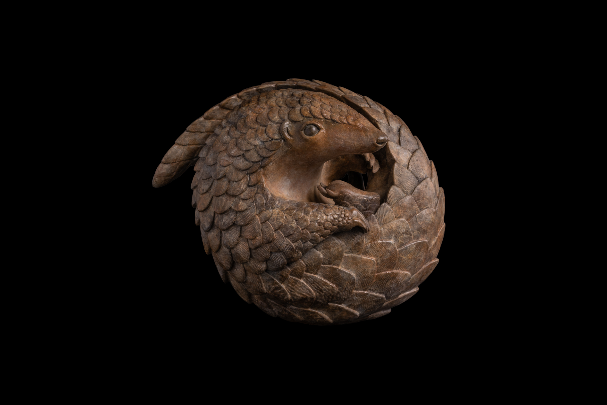 Bronze Pangolin