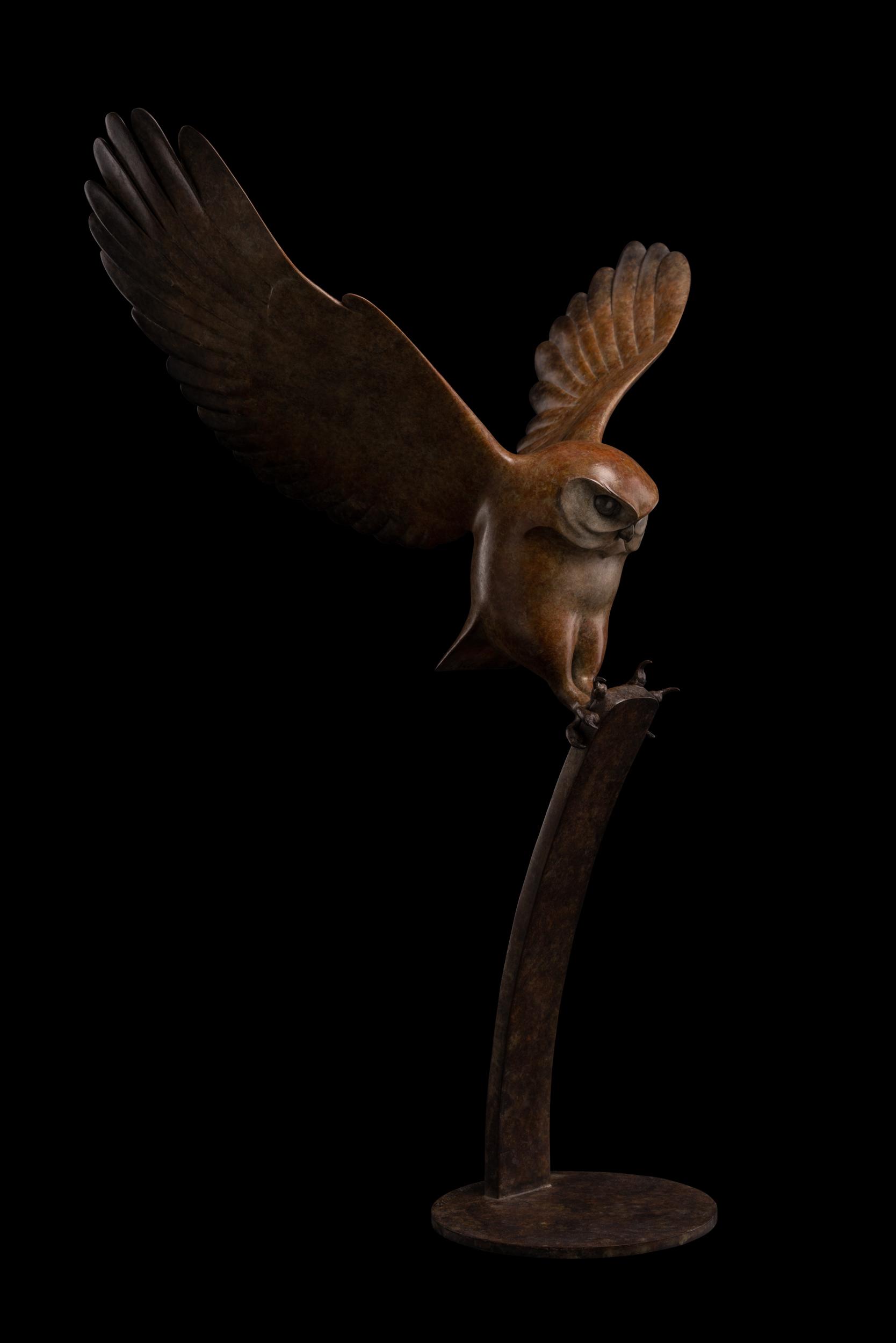 Bronze Flying Little Owl