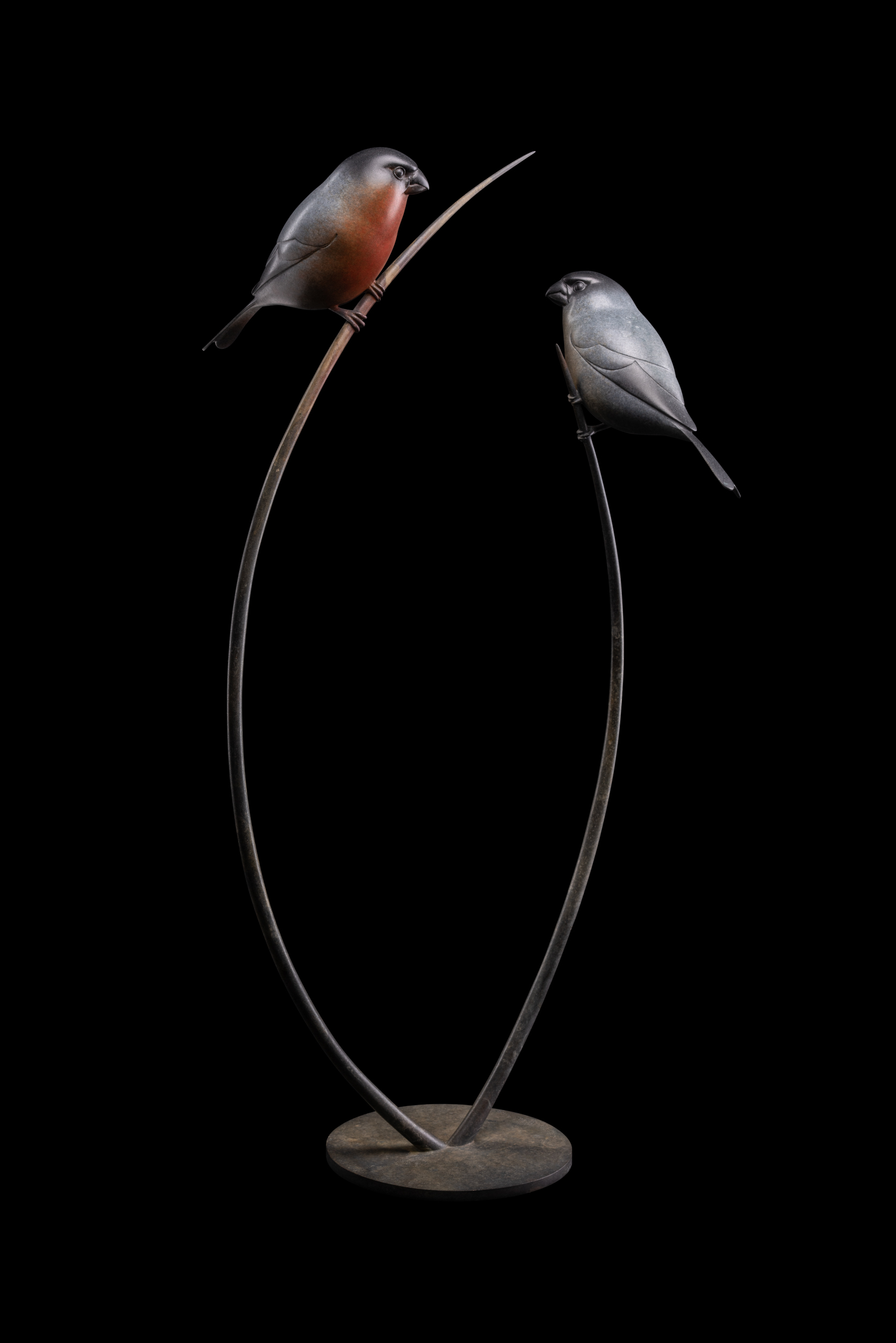 Bronze Bullfinches