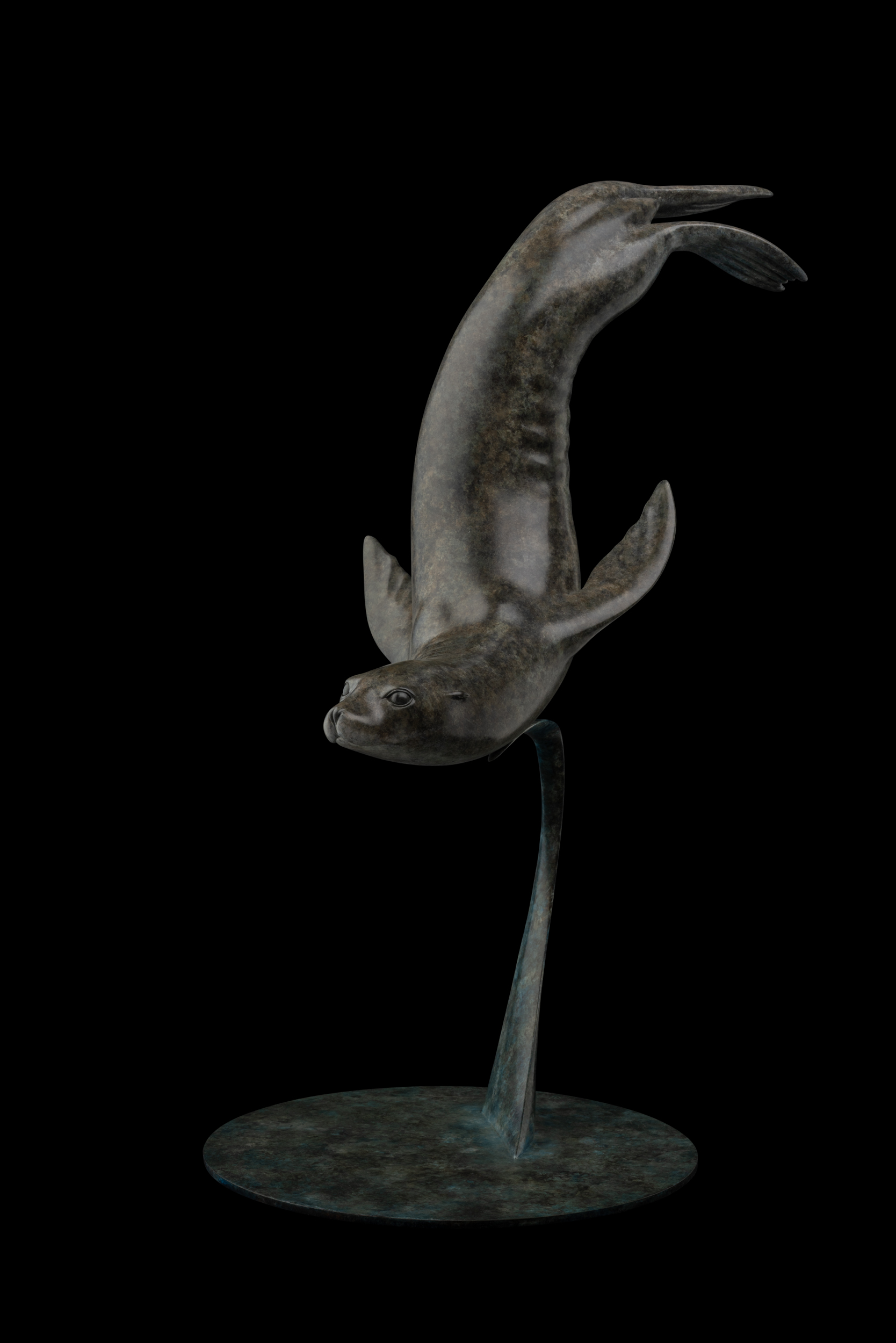 Bronze Sea Lion