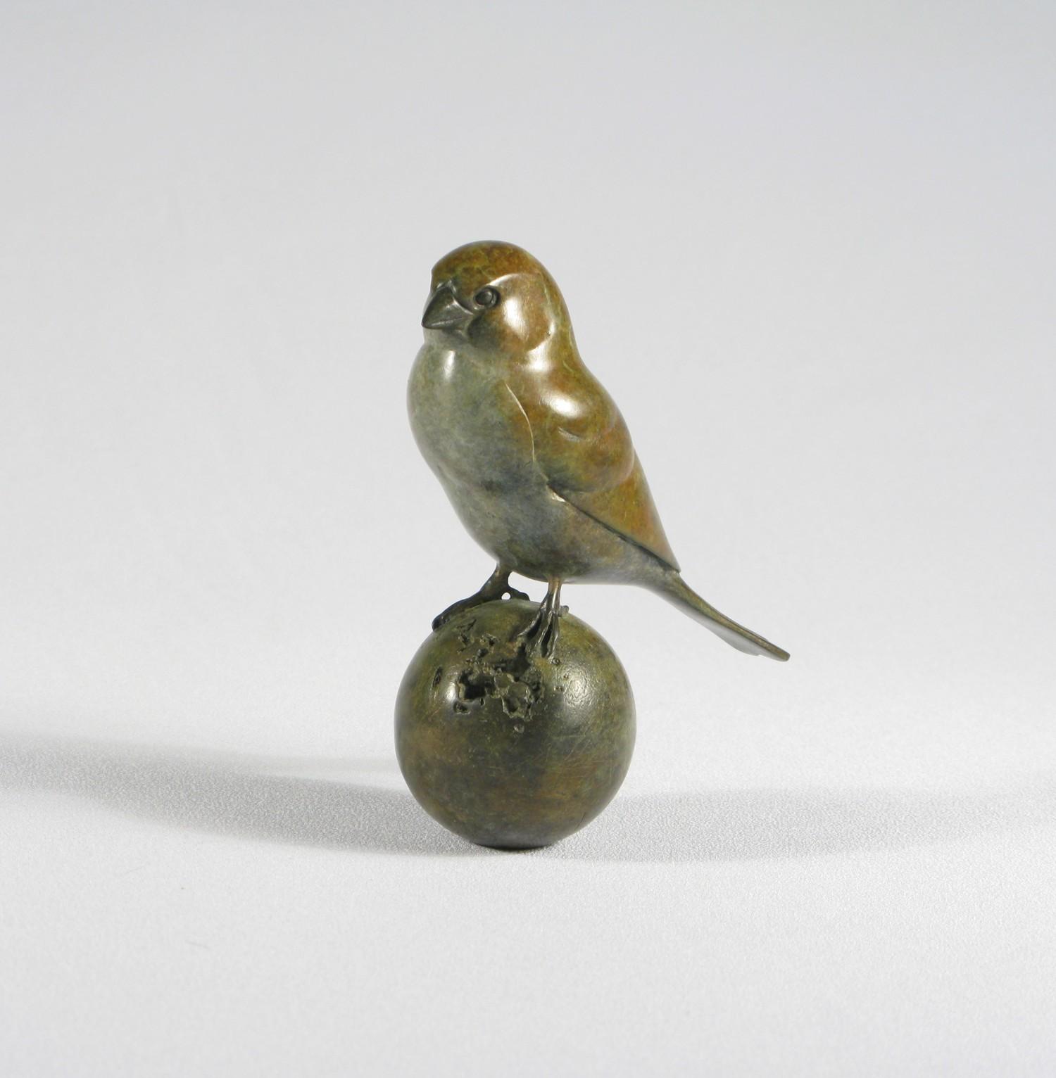 Bronze Sparrow